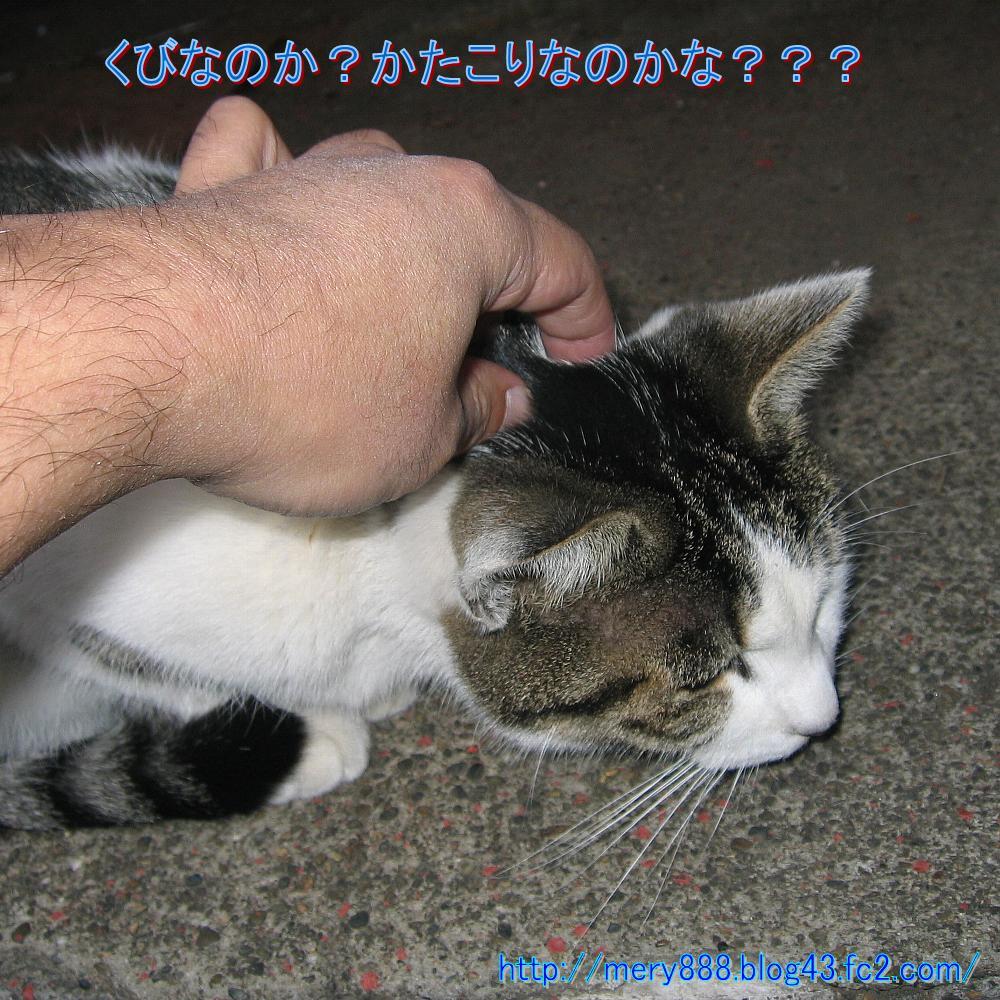 笑う猫の生活002
