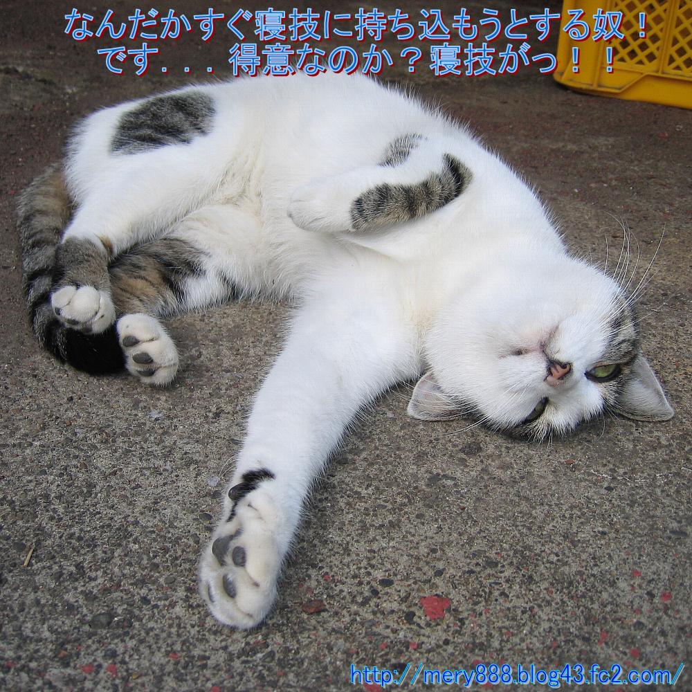 笑う猫の生活004
