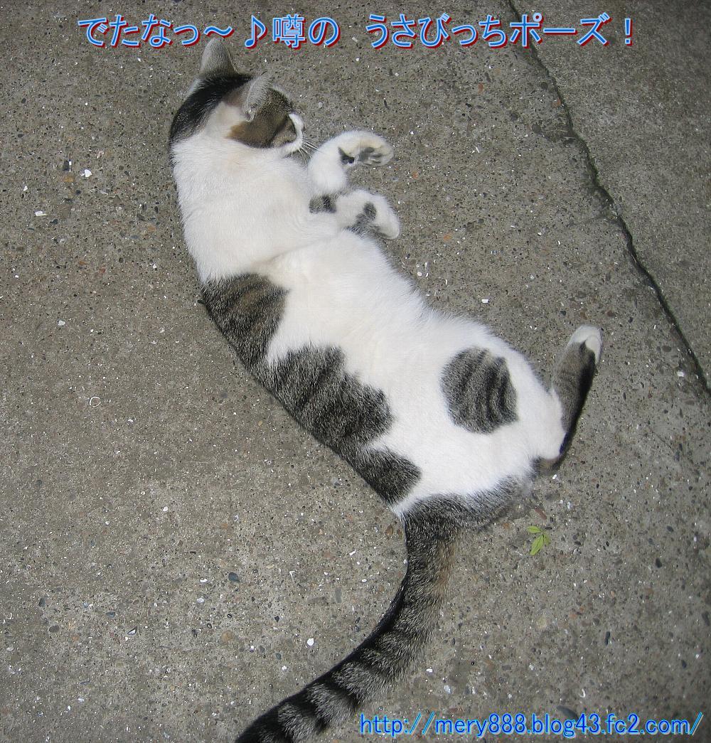 ぶひっぺろ004