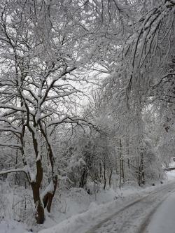 雪と木_convert_20111202192847
