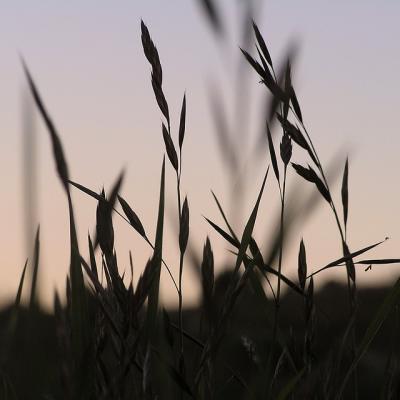 grassのシルエット_convert_20120622103801