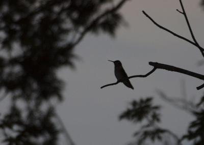 夕暮れの鳥_convert_20120628154119