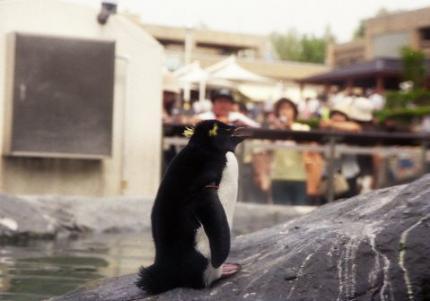 旭山岩飛びペンギン_convert_20120801150011
