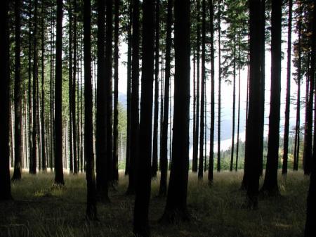 trees_convert_20120628153947.jpg