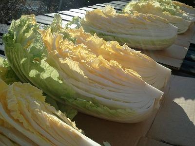 20131221白菜