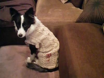 レイの新しぃセーターよ♪がんんばるよ