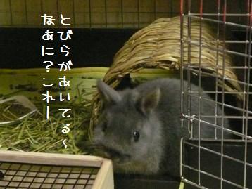 20101217_01.jpg