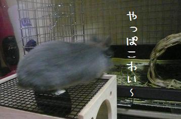 20101217_03.jpg