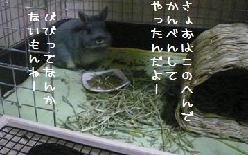 20101217_04.jpg