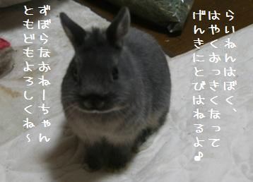 20101230_04.jpg