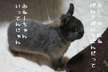 20110103_03.jpg