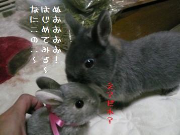 20110107_02.jpg