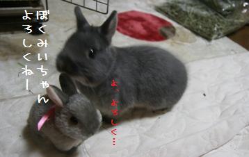 20110107_03.jpg