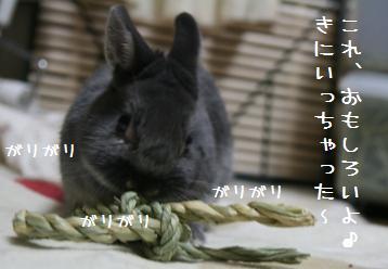 20110212_04.jpg