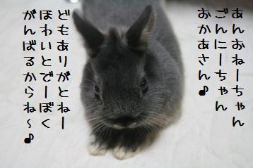 20110212_05.jpg