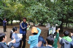 樹木観察会