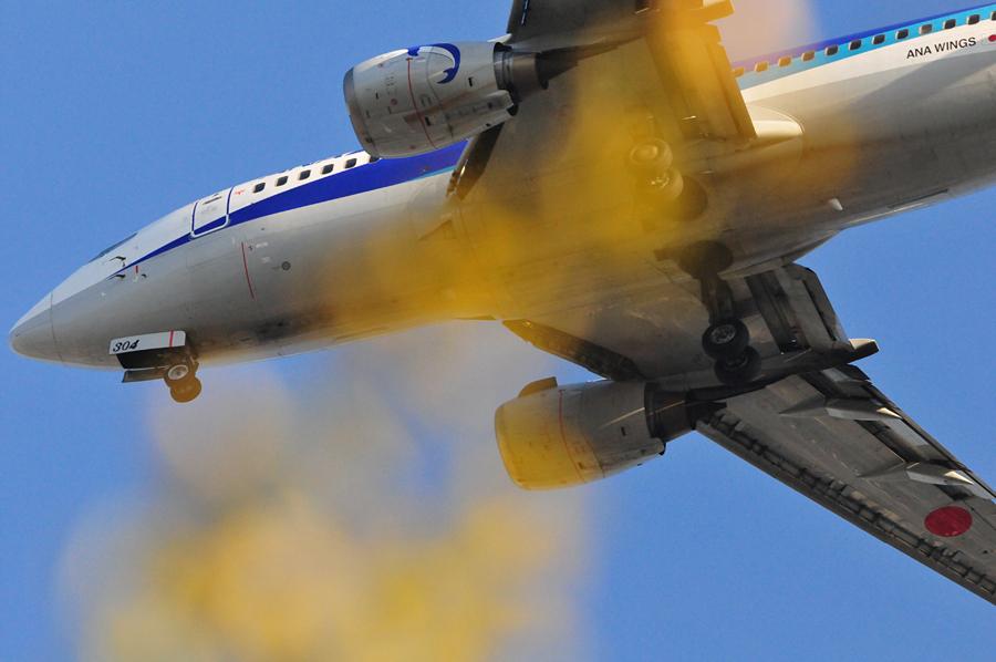 イチョウ飛行機