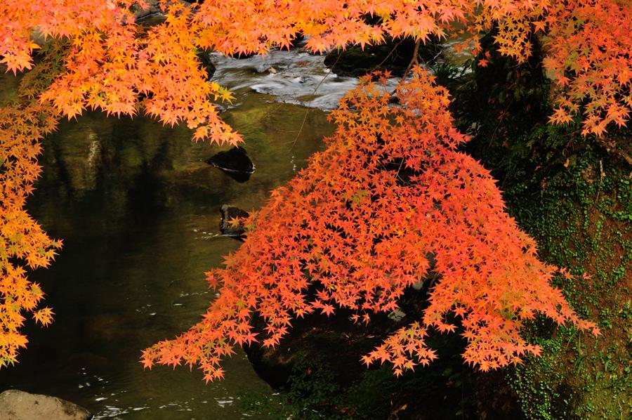紅葉(筑紫耶馬溪)
