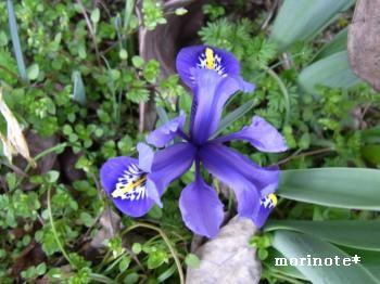 2011.03紫の花縮小ph