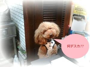 2011-06-02_19_44_54-picsay.jpg