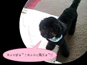 2011-06-04_16_43_29-picsay.jpg