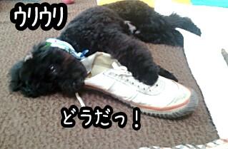 2011-06-04_16_56_25-picsay.jpg
