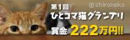 bnr_catcat_btn.jpg