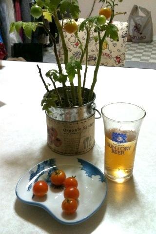 トマト収穫1