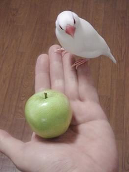 文鳥りんご
