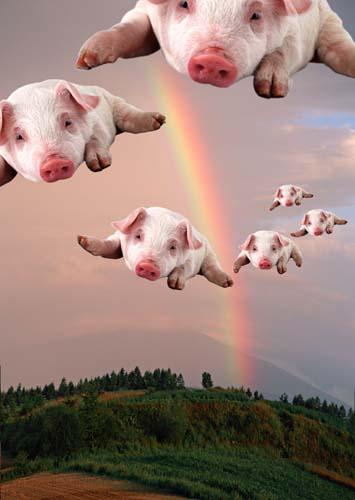 子豚の飛翔
