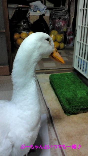 2011-0319-ga-chan4_convert_20110322151011.jpg