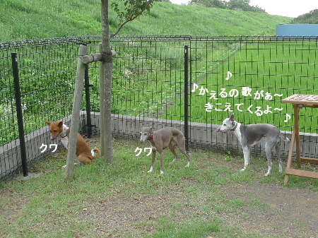 2011_0812ナッキー0013