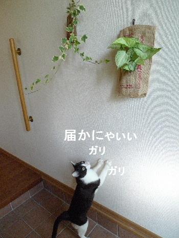 2011_0830ナッキー0027