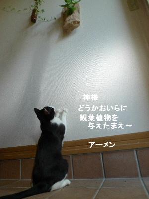 2011_0830ナッキー0030