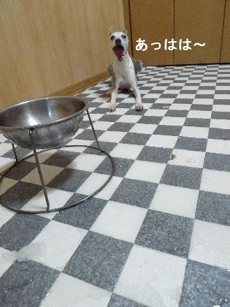 2011_0915ナッキー0093
