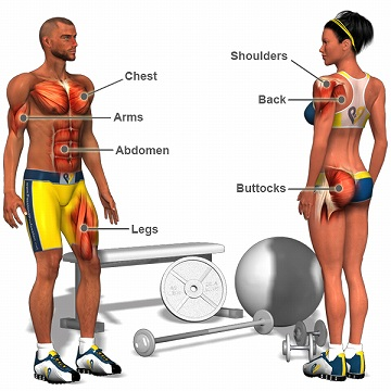 s-Muscle-Exercises-l.jpg