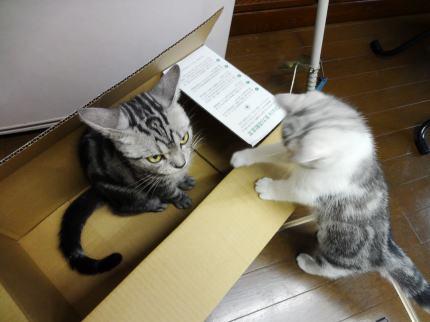 びーちゃんが箱