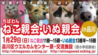 nekoinuoyakai20120129_320x180.jpg