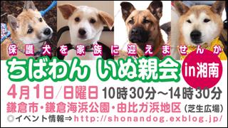 shounan20120401_320x180.jpg