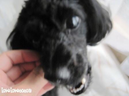 IMG_3258-cocoa_20110605174847.jpg