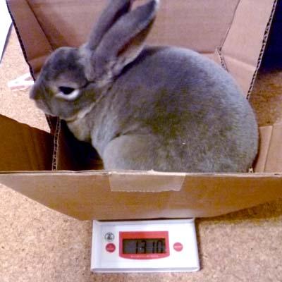 20110917夜:体重測定3ようやく落ち着きました
