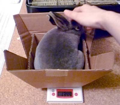 20110917:体重測定2落ち着かせます