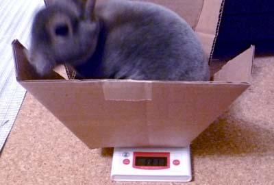 20110917:体重測定1動いちゃいます