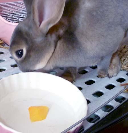 20111017:柿>ぷいっ