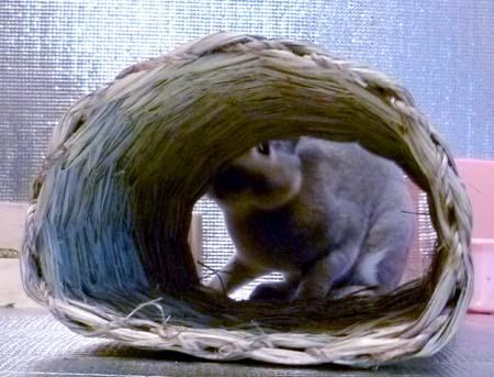 20111025:トンネルの向こうから