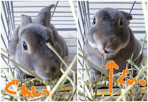 20111112:お食事