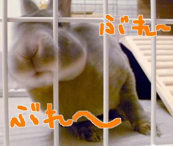 20111121:ぶれぶれ