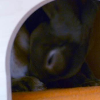 20111124:食糞だってしちゃう