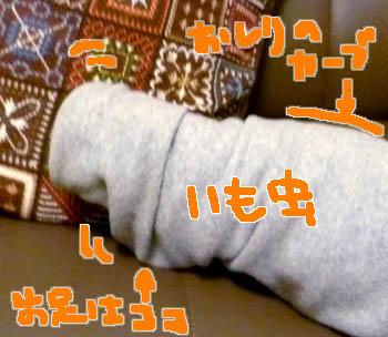 20111208:芋虫状態