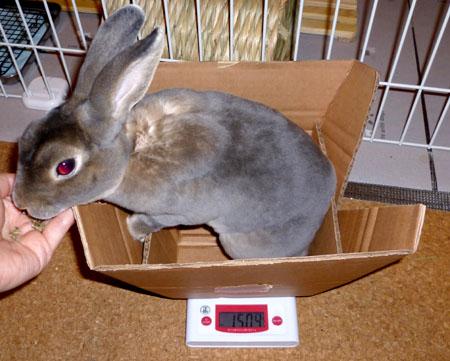 20120103:体重測定